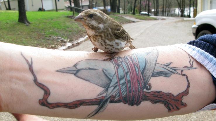 Arm Birds